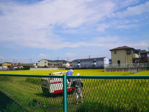 稲刈り99