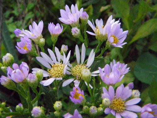 紫苑918