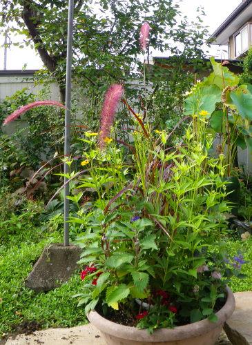 秋の寄せ植え925