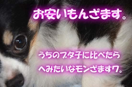 6p2.jpg