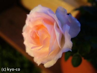 20111024006_20111026130047.jpg