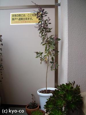 20111105001.jpg