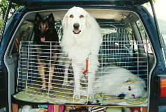 dogs23.jpg