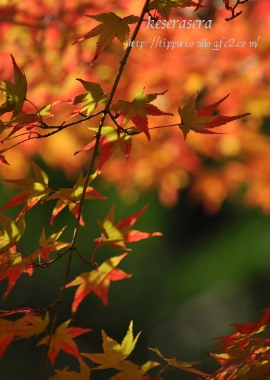27京都DSC_0599