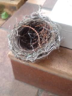 小鳥の巣2