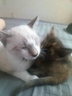 クウガ&子猫