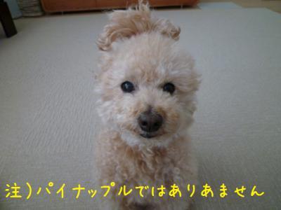 ぱいなぽー