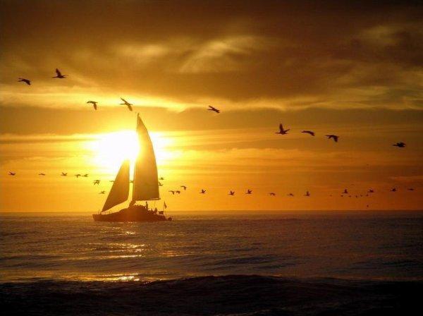 太陽と鳥の群れのimage