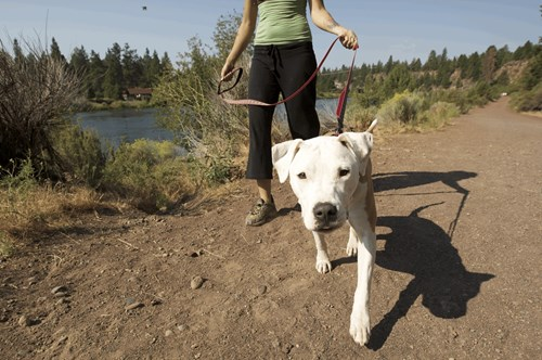 散歩する犬のimage