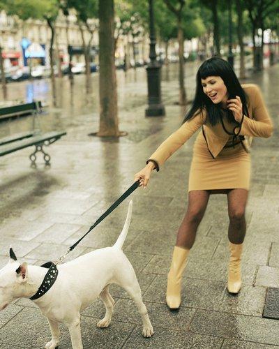 犬の散歩2image