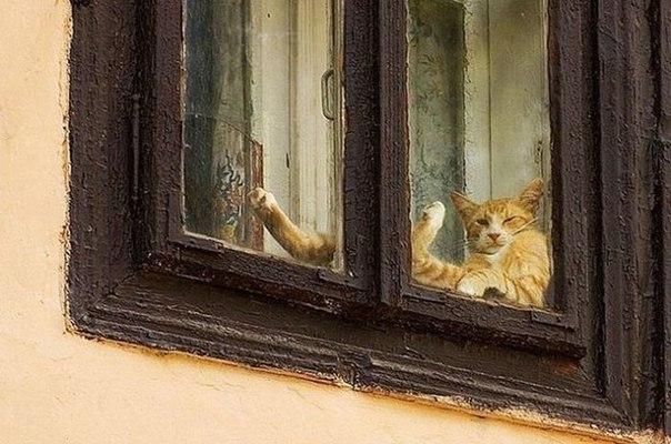 とある窓辺のねこさんのimage
