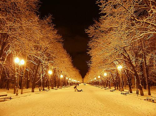 冬の黄金色なimage