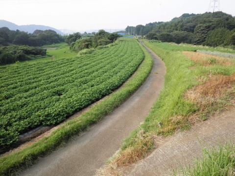 坂本古道67