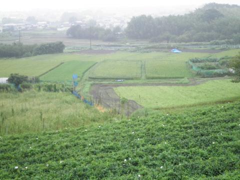 稲田を望む08