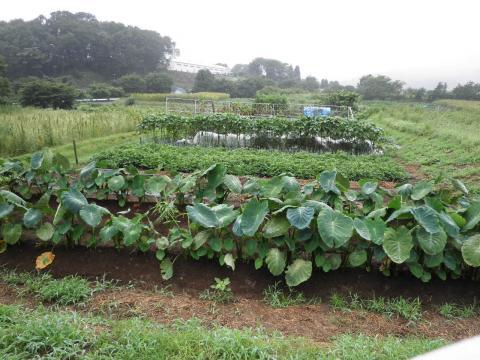 野菜畑20