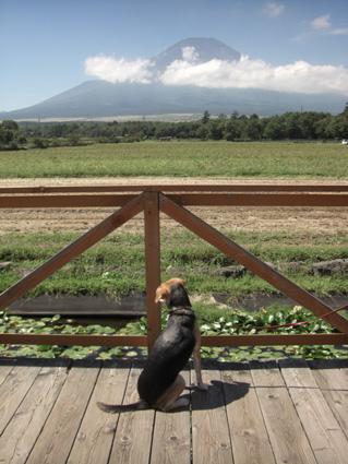 富士山とトナ