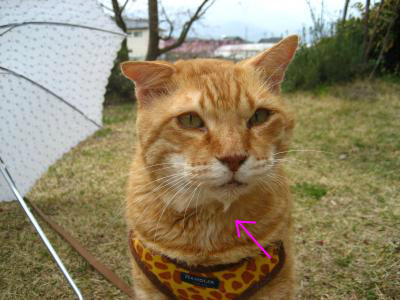 snap_tonekori6_201222212224.jpg