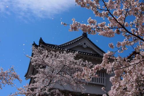 tsuyama_sakura1.jpg