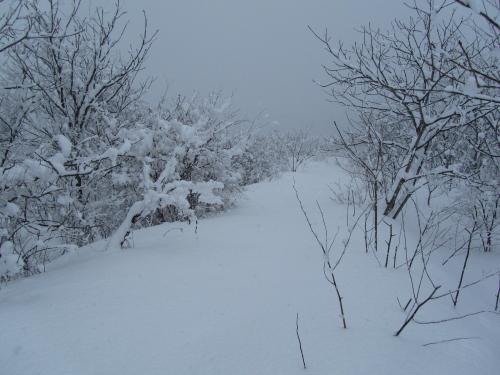 昨日の雪原