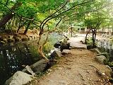 池の中の道1