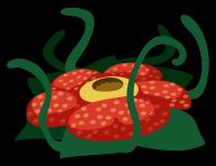 C植物012_ラフレシア