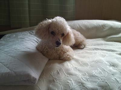 ベッドのTARO