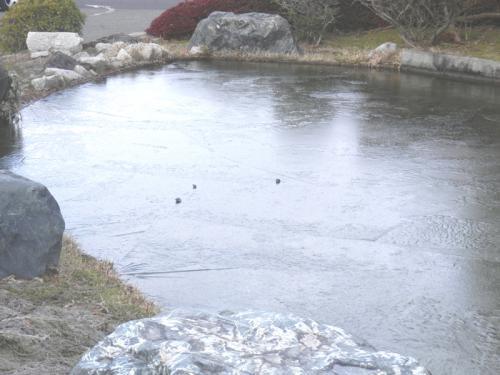 2013-2-25築山の池凍結