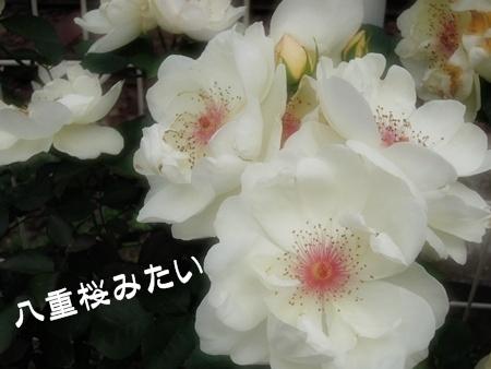 130513-78.jpg