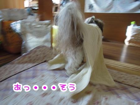 DSCN1037_20110817174657.jpg