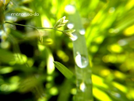 1217+007_convert_20111217205929.jpg