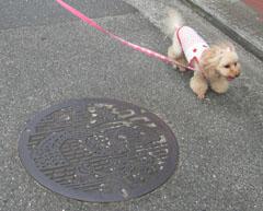 ばぁばとお散歩9