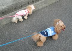 ご近所散歩へGO 4