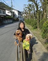 錦帯橋散歩