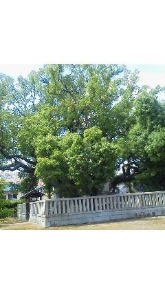 201306141349000   楠木