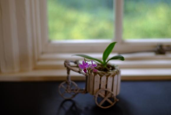 窓辺の花-2_R