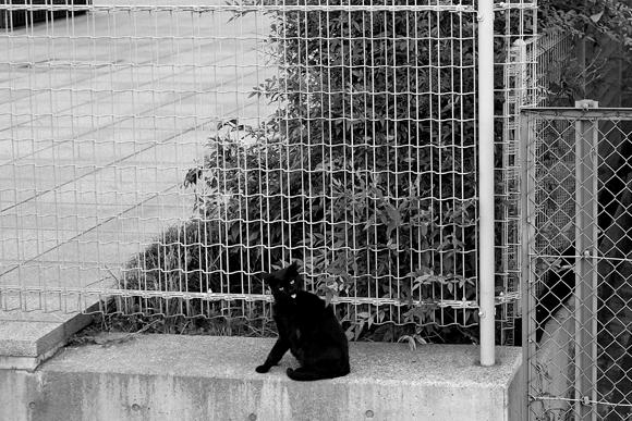 黒猫-5_R