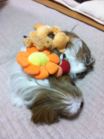 つぼみのおもちゃ盛り