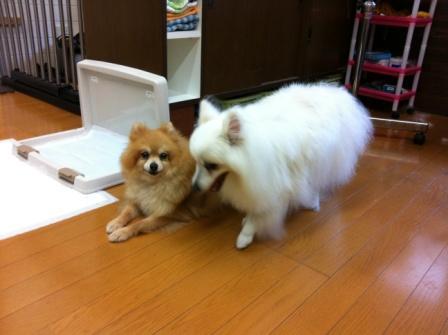 テコとサッちゃん