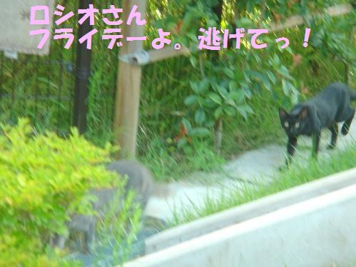 20111029_7.jpg