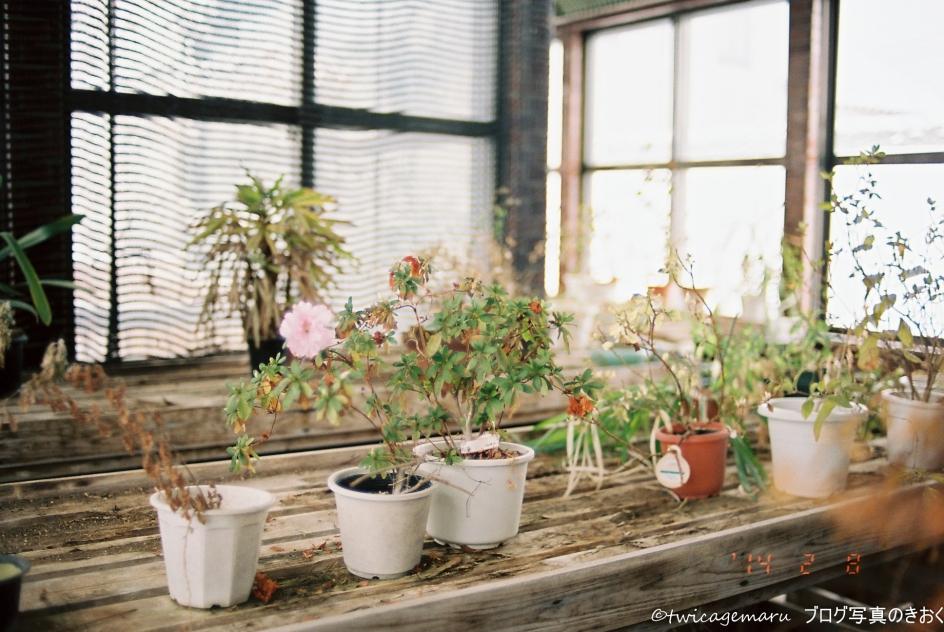温室の花2