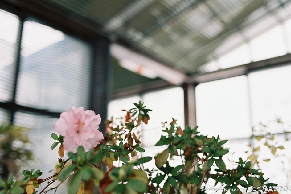 温室の花3