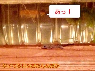 20141010211936bb1.jpg
