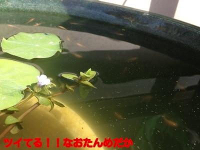 X_lo4PK4eAb6wnB1411378745_1411378852.jpg