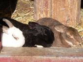 ウサギ縮小