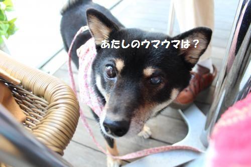060_convert_20131125173859.jpg