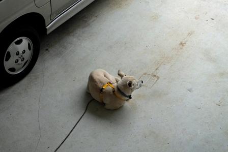 ガレージのユキ