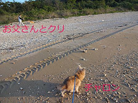 DSC03722 - お散歩のコピー