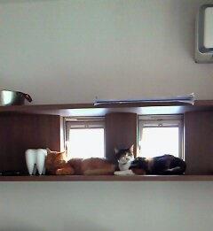 トトロとミケロ
