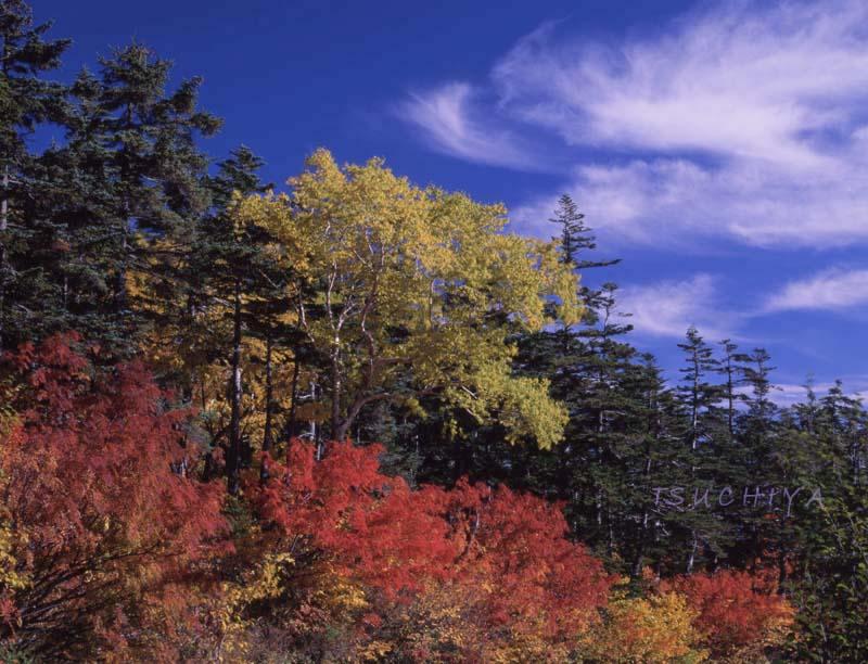 長野県 乗鞍岳山頂 紅葉 シノゴ