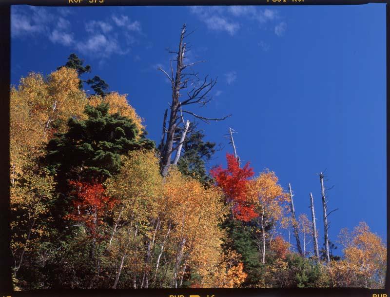 長野県 乗鞍岳山頂 紅葉